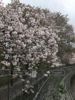 花,春,屋外,景色,樹木,草木,ブルーム,ブロッサム,フローラ