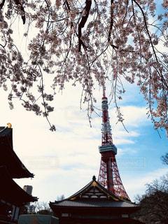 空,桜,東京タワー,木,屋外,花見,タワー,樹木,お花見,クラウド