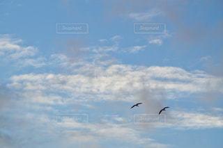 空を飛んでいる鳥の写真・画像素材[3013954]