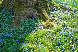 森の真ん中にある木の写真・画像素材[3030713]