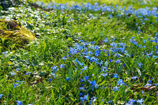 花園のクローズアップの写真・画像素材[3030715]