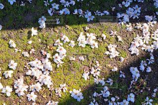 花園のクローズアップの写真・画像素材[3035448]