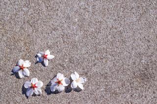 風に連れられてきた花びらの写真・画像素材[3035450]