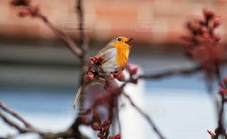 枝に座っている小鳥の写真・画像素材[3035453]