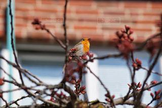 木の枝に止まっている小鳥の写真・画像素材[3035454]