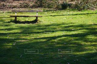 ベンチは緑豊かな畑の真ん中に座っているの写真・画像素材[3077532]