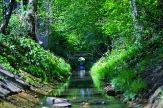 森を流れる川の写真・画像素材[3144247]