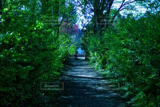 森の中の木の写真・画像素材[3144261]