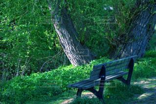 公園の真ん中に座っている木製のベンチの写真・画像素材[3144262]