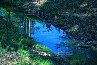 池のクローズアップの写真・画像素材[3144256]