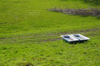 緑豊かな畑のクローズアップの写真・画像素材[3144260]