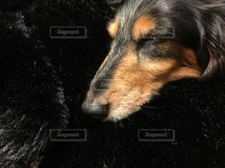 犬の写真・画像素材[239042]