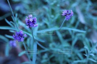 花のクローズアップの写真・画像素材[3029329]