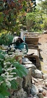 猫のいる庭の写真・画像素材[2986830]