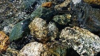 キラキラ輝く水面の写真・画像素材[3011442]