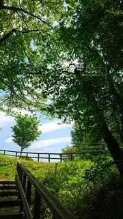 青空の公園の写真・画像素材[3011443]