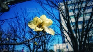 黄色い花と青空の写真・画像素材[3034339]