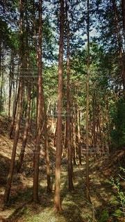 森の中の木の写真・画像素材[3041936]