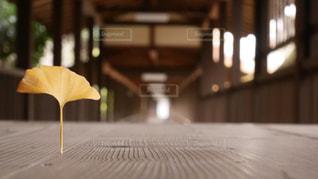 銀杏の案内の写真・画像素材[2992036]