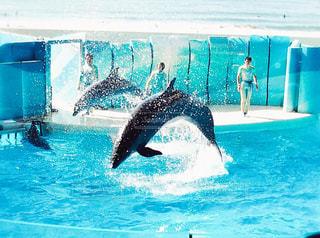 イルカと海の写真・画像素材[2989365]