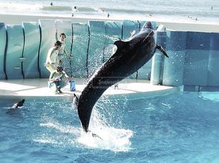 クジラと海の写真・画像素材[2989394]