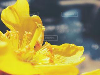 黄色い花と玉ボケの写真・画像素材[2996537]