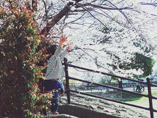 子ども,桜,屋外,女の子,樹木,さくら