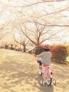 春のトンネルの写真・画像素材[3038622]
