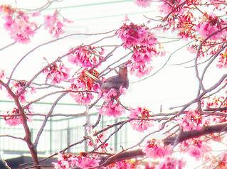 花,鳥,樹木,さくら,ブロッサム