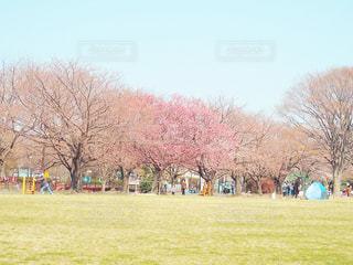 空,公園,花,桜,屋外,景色,草,樹木,日中,さくら