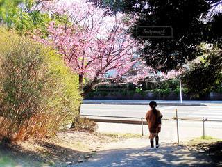 子ども,花,桜,屋外,ピンク,樹木,人,草木,さくら