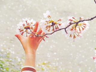 春を鷲掴みの写真・画像素材[3072690]
