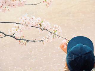 春の薫りの写真・画像素材[3072691]