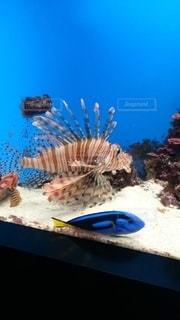 魚,屋内,綺麗,熱帯魚,青,水族館,鮮やか,水中,明るい,アクアリウム,水槽,鮮明,キレイ