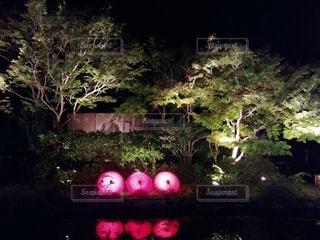 屋外,京都,綺麗,樹木,イルミネーション,ライトアップ,日本,和傘,和,古都,草木,美,キレイ