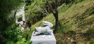 古事記にも記され縁結びでも有名な白兎神社で撮影の写真・画像素材[4462458]