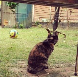 庭に座っている猫の写真・画像素材[2990631]
