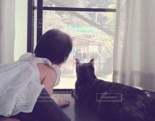 猫と娘「外にはどんな世界があるのかニャ」の写真・画像素材[2990642]