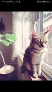 猫,動物,屋内,子猫,座る,嫌な顔,ネコ科の動物
