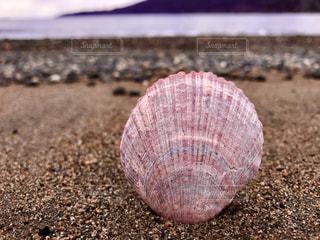 海と貝殻の写真・画像素材[2998931]