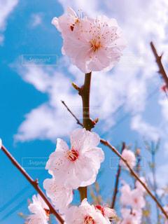 花のクローズアップの写真・画像素材[3015911]
