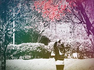 梅撮る女性の写真・画像素材[3028397]