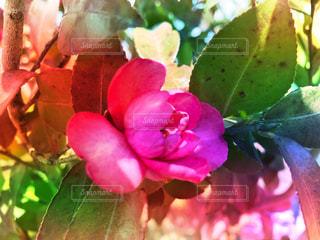 植物のクローズアップの写真・画像素材[3030851]
