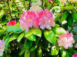 花のクローズアップの写真・画像素材[3030862]
