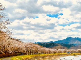 自然,風景,空,桜,屋外,ピンク,山,サクラ,樹木,草木,日中,クラウド,さくら