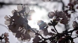 花のクローズアップの写真・画像素材[3083722]
