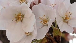花のクローズアップの写真・画像素材[3083723]