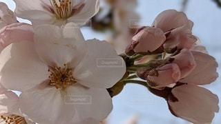 花のクローズアップの写真・画像素材[3083725]
