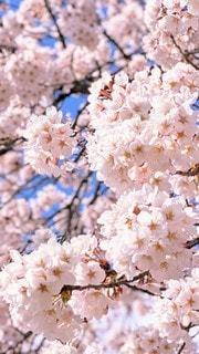 花のクローズアップの写真・画像素材[3101672]