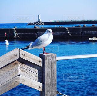 海辺の白い鳥の写真・画像素材[2998256]